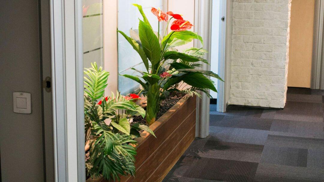 צמחייה למשרד