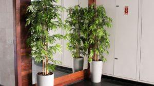 עצי במבוק בלובי בניין פרטי