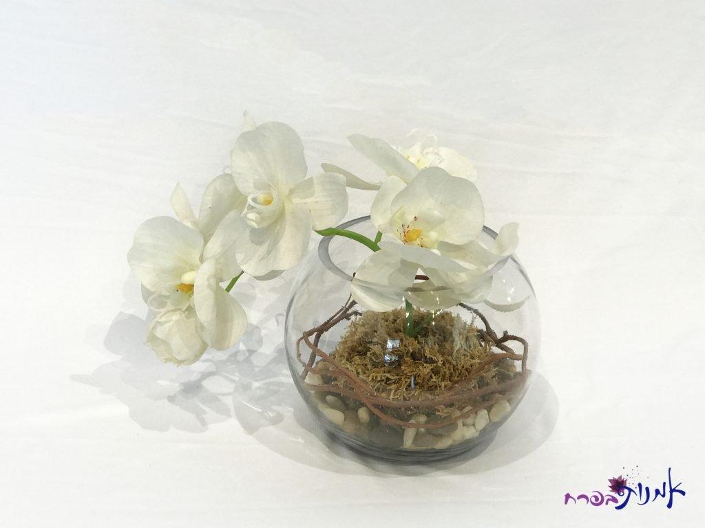 סידור סחלב בכלי זכוכית