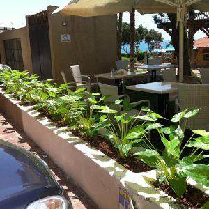 צמחייה מלאכותית עמידת חוץ באדניות קיימות