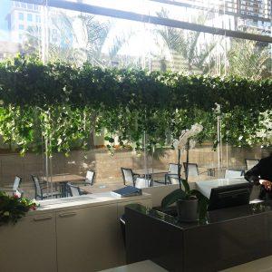 צמחים נשפכים למסעדה