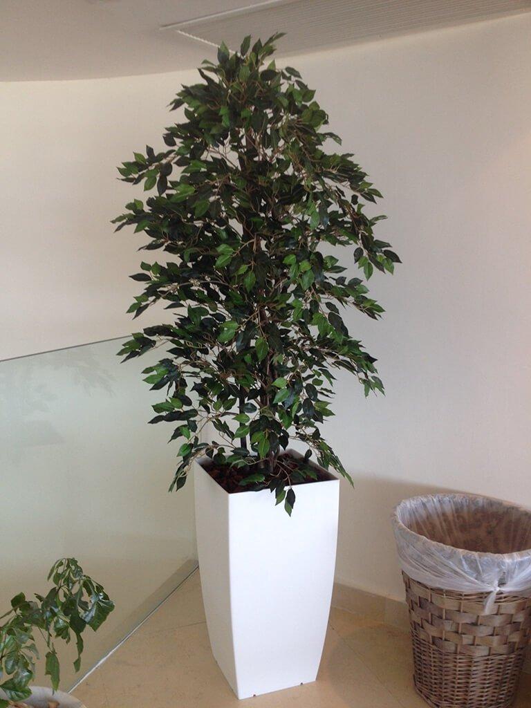 עץ פיקוס מלאכותי
