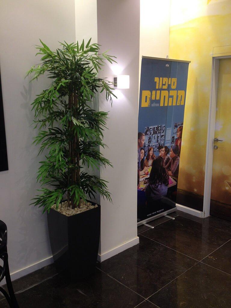 עץ במבוק במשרד
