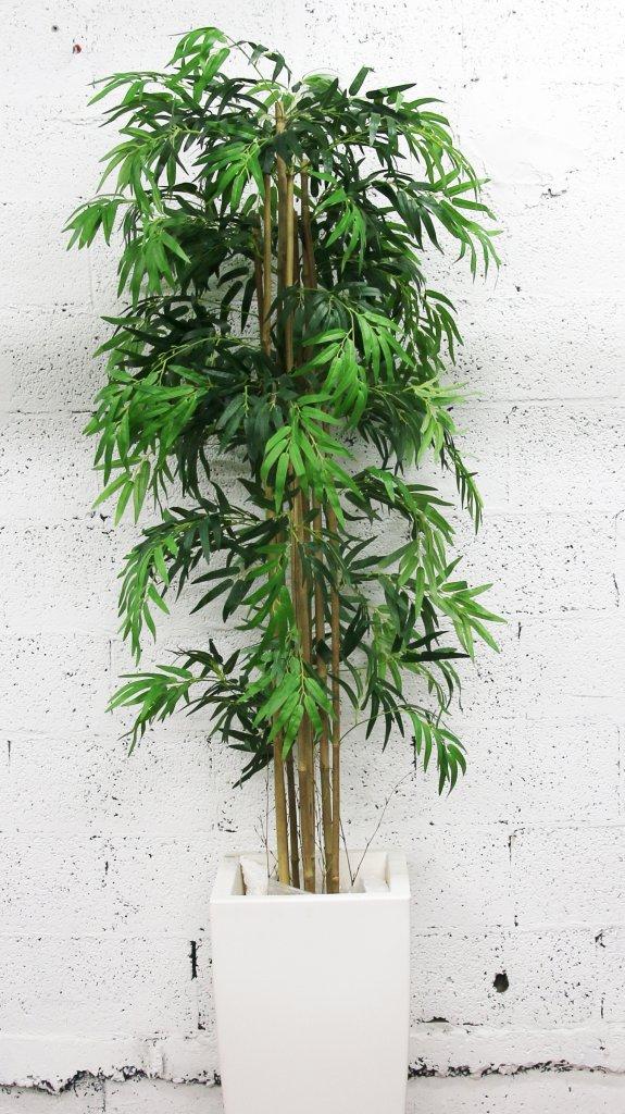 עץ במבוק