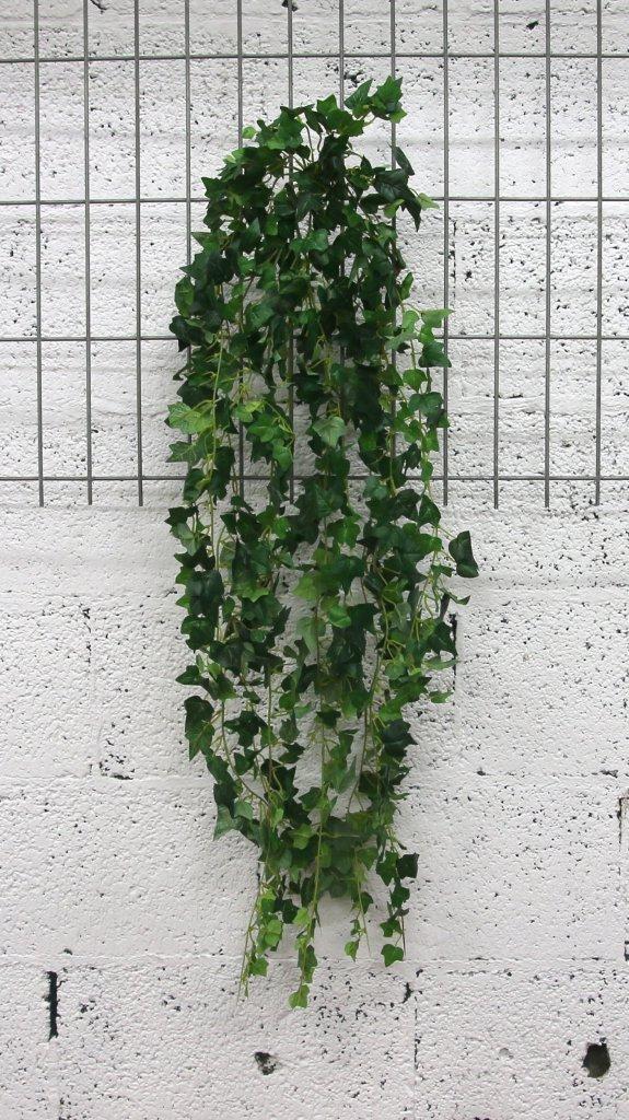 נשפך קיסוס ירוק עלים קטנים