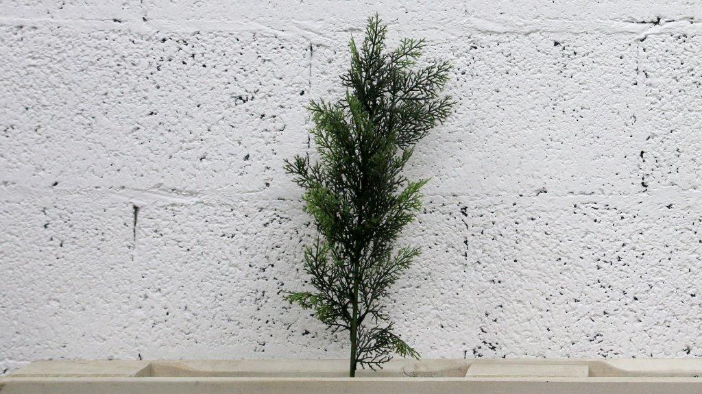 ענף ברוש