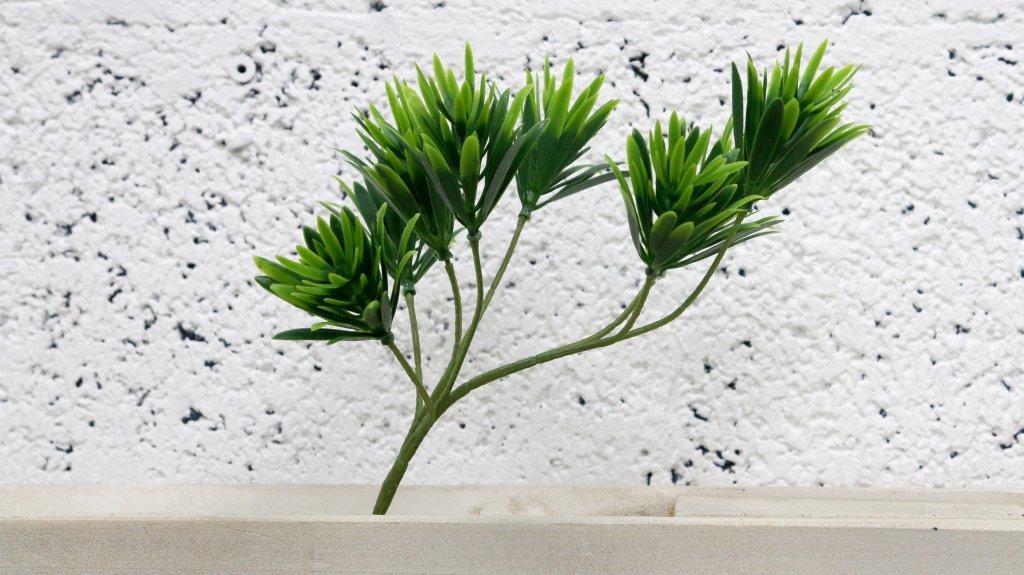 ענף עץ בונסאי איצטרובל