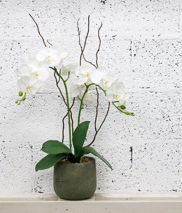 סחלב מלאכותי לבן כפול